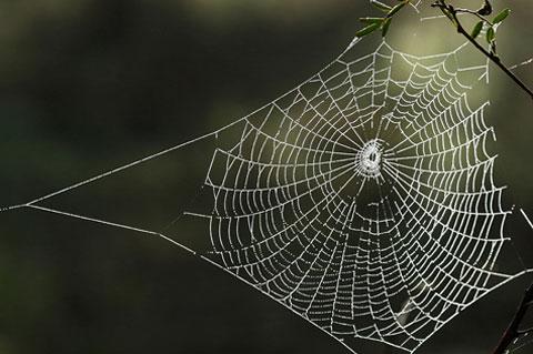 Tơ nhện và khả năng chống đạn