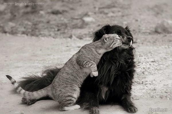 Ảnh độc đáo: Mèo và cún