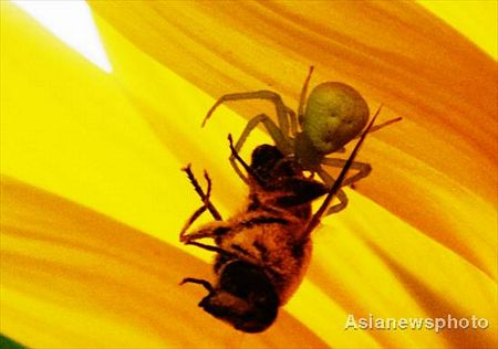chú nhện hình mặt người ở TRung Quốc