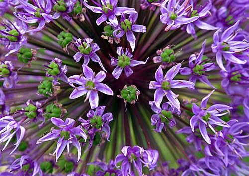 Ngắm những sắc mầu rực rỡ của hoa (8)