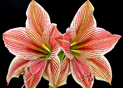 Ngắm những sắc mầu rực rỡ của hoa (7)