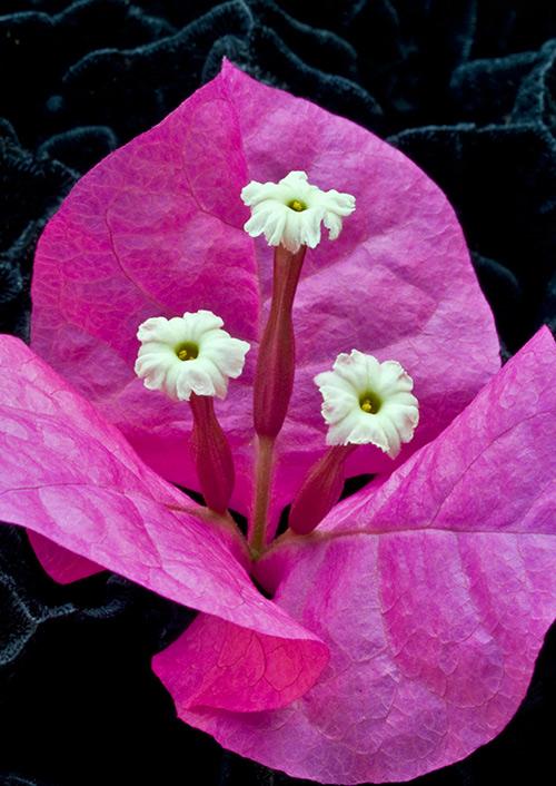 Ngắm những sắc mầu rực rỡ của hoa (5)