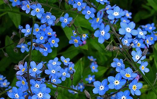Ngắm những sắc mầu rực rỡ của hoa (20)
