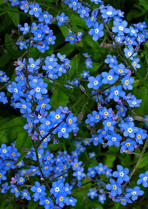 Ngắm những sắc mầu rực rỡ của hoa (3)