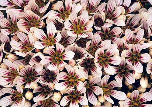 Ngắm những sắc mầu rực rỡ của hoa (2)