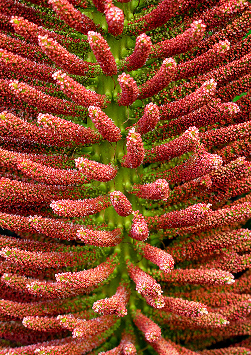 Ngắm những sắc mầu rực rỡ của hoa (1)