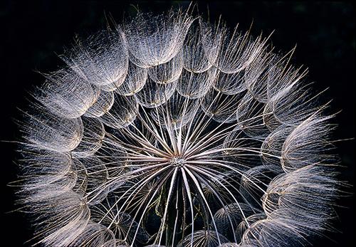 Ngắm những sắc mầu rực rỡ của hoa (18)