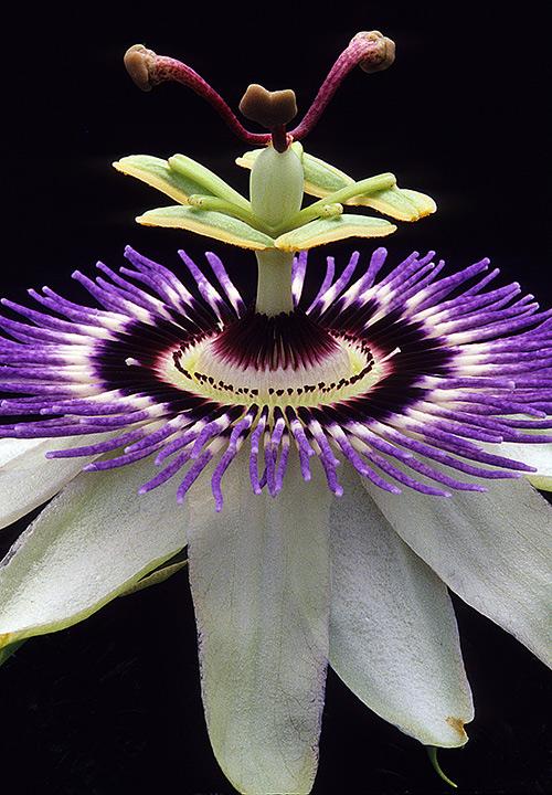 Ngắm những sắc mầu rực rỡ của hoa (17)