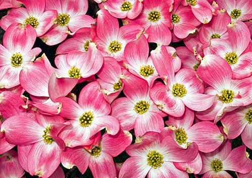 Ngắm những sắc mầu rực rỡ của hoa (16)