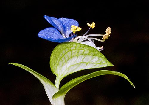 Ngắm những sắc mầu rực rỡ của hoa (12)