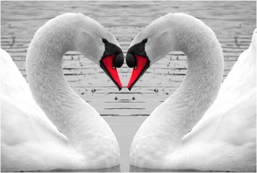 bird-love-Ban tinh ca cua nhung loai chim