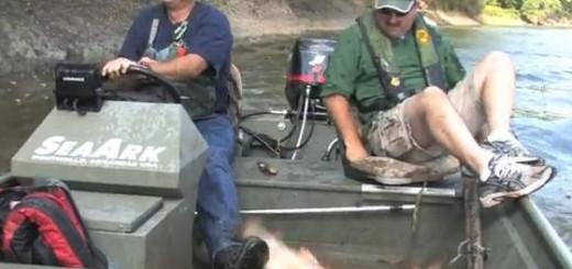 Cá chép bạc ... bay trên sông Wabash ở Indiana