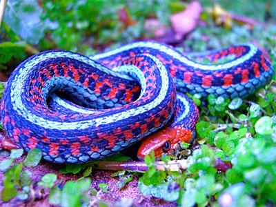 10 loài rắn kỳ lạ