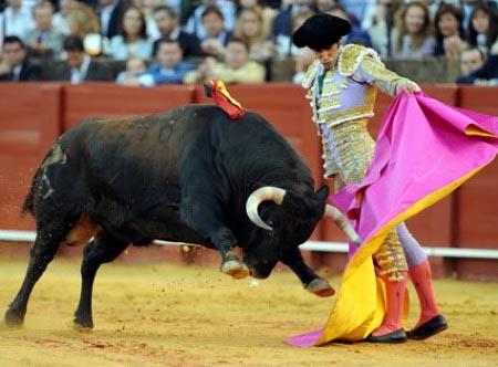 Trận đấu bò tót cuối cùng diễn ra ngày 25.9