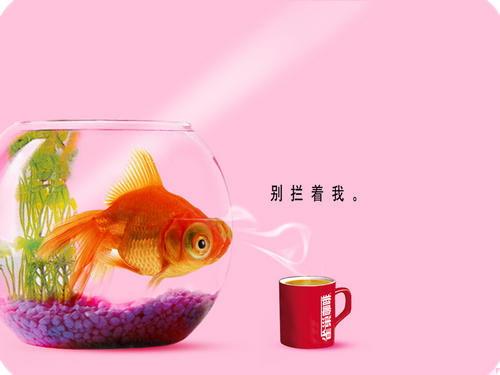Một số ảnh quảng cáo ấn tượng