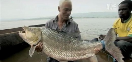 River Monsters - bat song ca ho Piranha