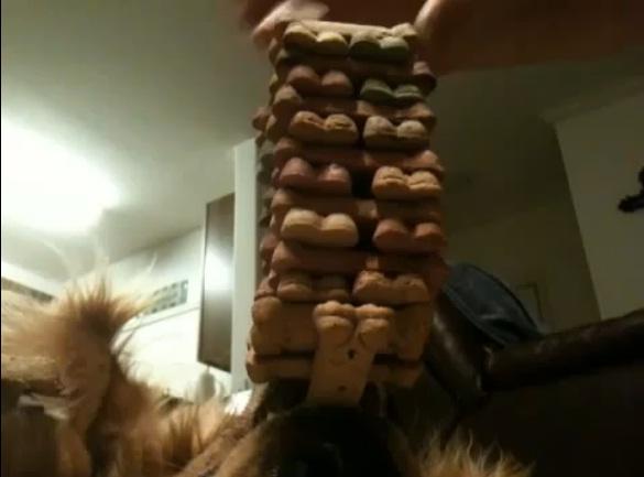 Xem chó trổ tài giữ thăng bằng bằng ... mũi