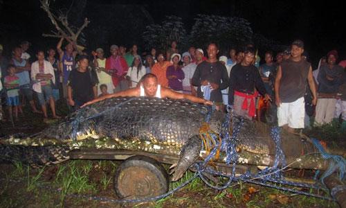 ... được xem là con cá sấu lớn kỷ lục từng bị bắt giữ - Ảnh: AFP