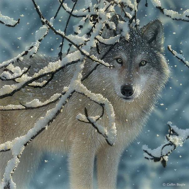Những bức vẽ động vật hoang dã thật tới từng chi tiết của họa sĩ Collin Bogle (8)