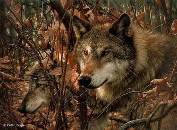 Những bức vẽ động vật hoang dã thật tới từng chi tiết của họa sĩ Collin Bogle (6)