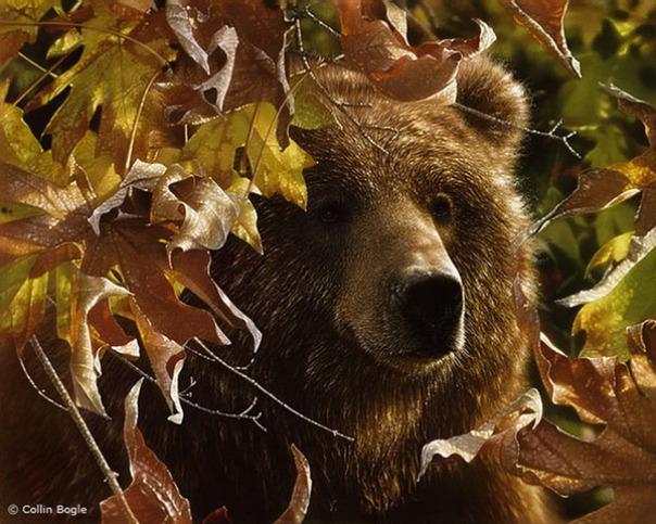 Những bức vẽ động vật hoang dã thật tới từng chi tiết của họa sĩ Collin Bogle (5)