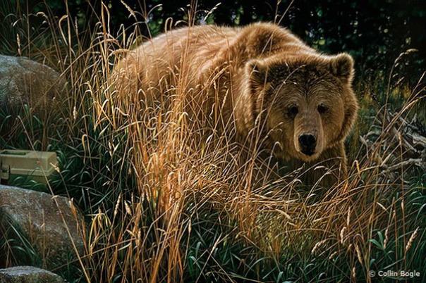Những bức vẽ động vật hoang dã thật tới từng chi tiết của họa sĩ Collin Bogle (2)