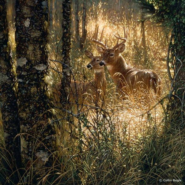 Những bức vẽ động vật hoang dã thật tới từng chi tiết của họa sĩ Collin Bogle (1)