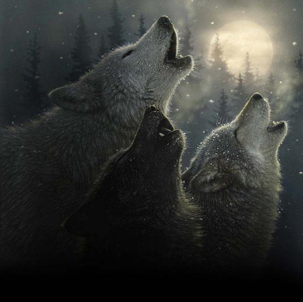 Những bức vẽ động vật hoang dã thật tới từng chi tiết của họa sĩ Collin Bogle (11)