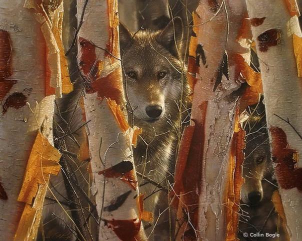 Những bức vẽ động vật hoang dã thật tới từng chi tiết của họa sĩ Collin Bogle (10)