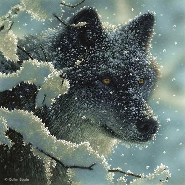 Những bức vẽ động vật hoang dã thật tới từng chi tiết của họa sĩ Collin Bogle (9)