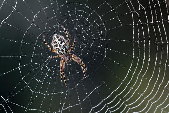 Con nhện - Biểu tượn Halloween