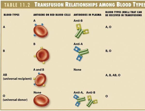 Tại sao con người lại có 4 nhóm máu khác nhau?