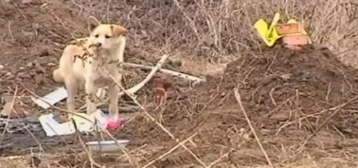 Cảm động với chú cún nhịn ăn canh mộ chủ suốt 7 ngày | Chu cho trung thanh