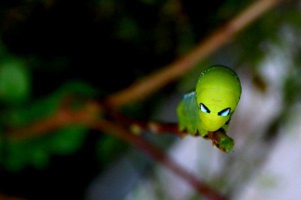 """Kỳ dị những chú sâu bướm """"ngoài hành tinh"""""""