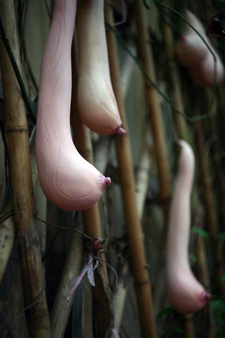 Giàn mướp mọc ra… gò bồng đảo ở Việt Nam | Chuyện lạ (5)