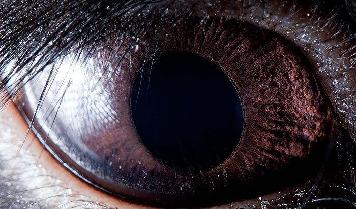 Mắt thỏ đen.