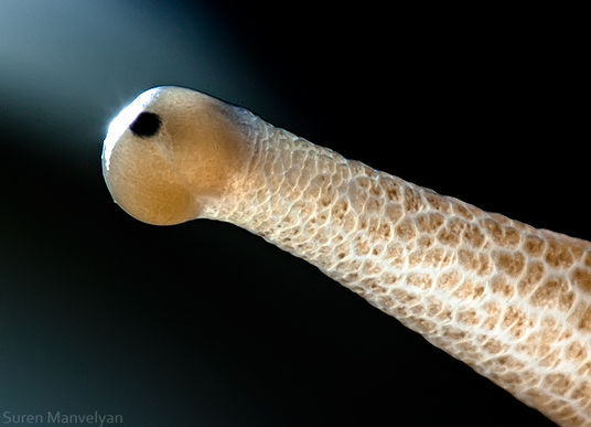 Đôi mắt nằm trên sừng rất đặc biệt của loài ốc sên.