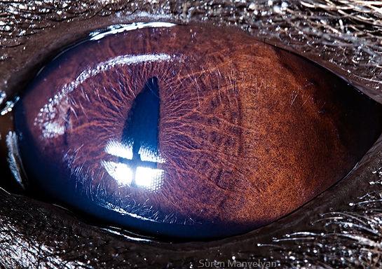 Hình ảnh trong mắt linh cẩu hệt như trên bề mặt sao Hỏa vậy.