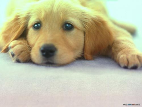 Cún con mắt buồn !