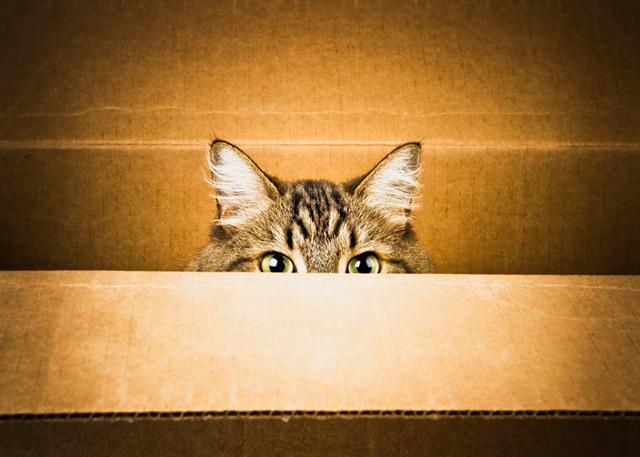 Những đôi mắt tròn xoe của bé mèo xinh | meo xinh | dang yeu (19)