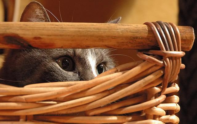 Những đôi mắt tròn xoe của bé mèo xinh   meo xinh   dang yeu (18)