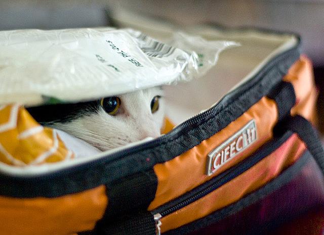 Những đôi mắt tròn xoe của bé mèo xinh   meo xinh   dang yeu (8)