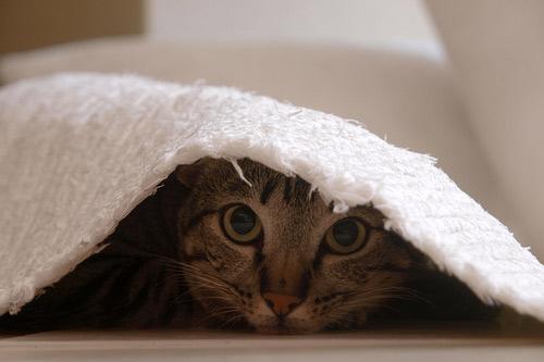 Những đôi mắt tròn xoe của bé mèo xinh   meo xinh   dang yeu (7)