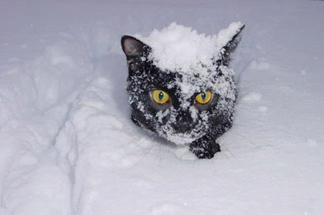 Những đôi mắt tròn xoe của bé mèo xinh   meo xinh   dang yeu (6)