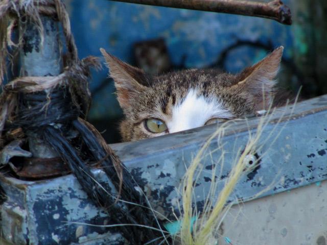 Những đôi mắt tròn xoe của bé mèo xinh   meo xinh   dang yeu (5)