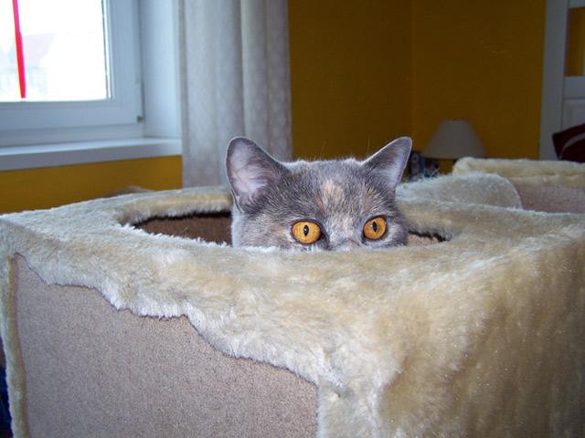 Những đôi mắt tròn xoe của bé mèo xinh   meo xinh   dang yeu (4)