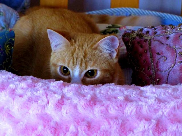 Những đôi mắt tròn xoe của bé mèo xinh   meo xinh   dang yeu (3)