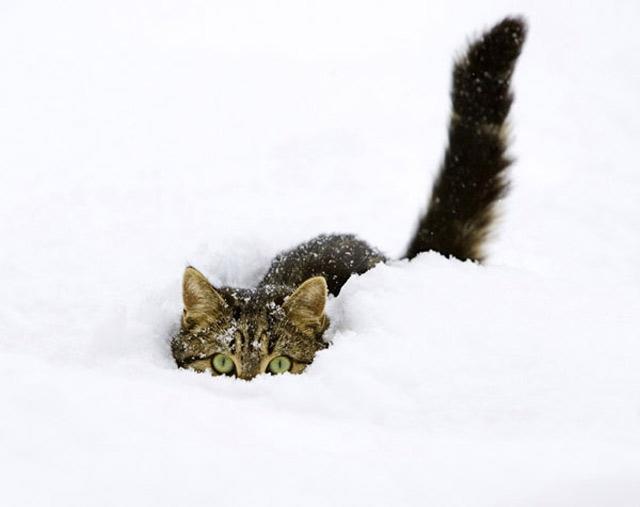 Những đôi mắt tròn xoe của bé mèo xinh   meo xinh   dang yeu (2)