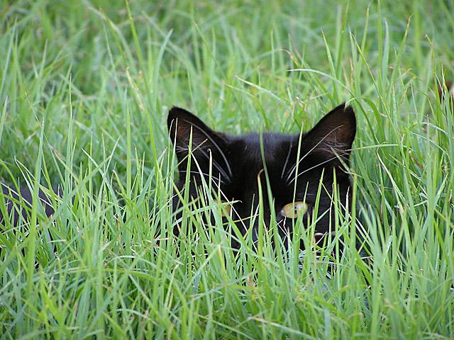 Những đôi mắt tròn xoe của bé mèo xinh   meo xinh   dang yeu (17)