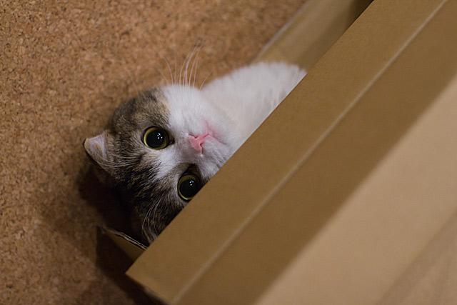 Những đôi mắt tròn xoe của bé mèo xinh   meo xinh   dang yeu (15)
